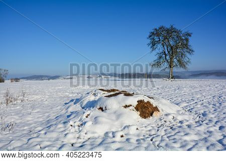 A Dung Heap With Snow In The Wild And Blue Skies And A Tree