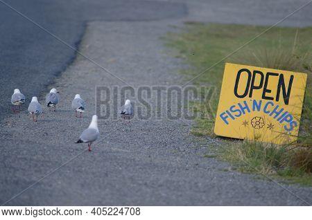 Red-billed Gulls Chroicocephalus Novaehollandiae Scopulinus Next To The Sign At A Restaurant. Oban.