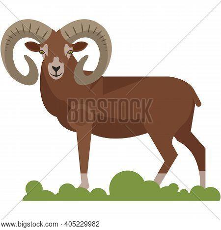 Bighorn Ram Wild Animal Isolated On White Background