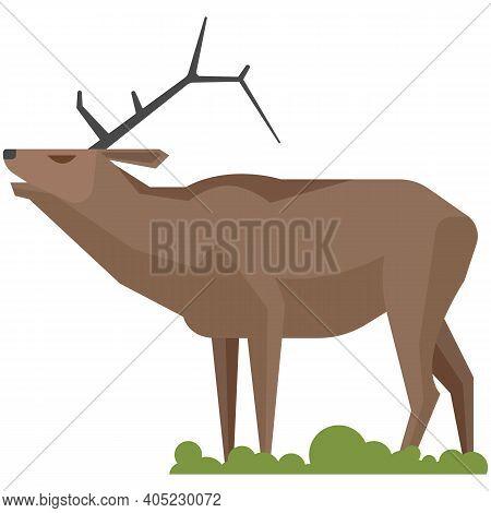 Wild Horned Reindeer Roaring Isolated On White Background