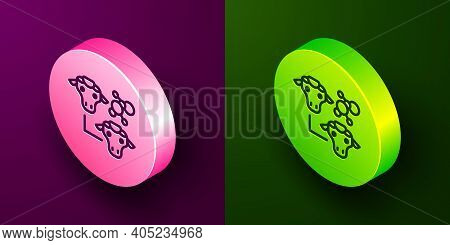Isometric Line Cloning Icon Isolated On Purple And Green Background. Genetic Engineering Concept. Ci