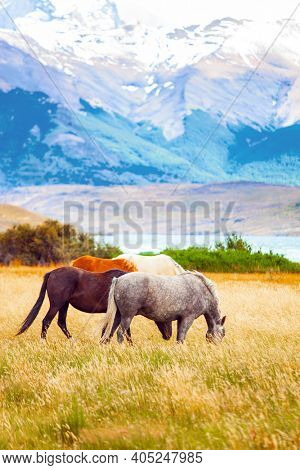 South American wild horses - mustangs graze on the grass. The famous Torres del Paine park in southern Chile. Lagoon Azul is amazing mountain lake at the foot of three rocks - torres.