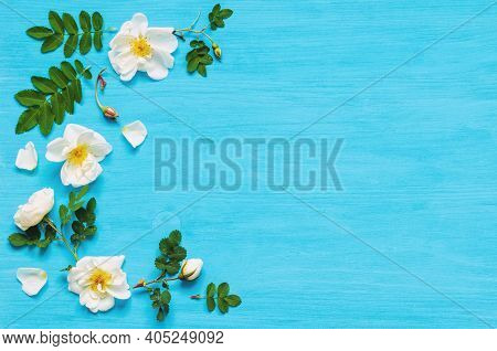 Spring background with spring composition made of white rose spring flowers on the blue wooden background. Flat lay, top view, space for text. Spring background with spring flowers, spring backdrop, spring still life