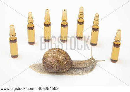 Helix Pomatia. Snail And Medical Ampoules For Injections. Mollusc And Invertebrate. Delicacy Meat An