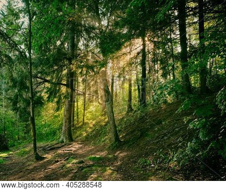 The Sun Rays Shine Through The Haze In The Summer Forest In The Morning