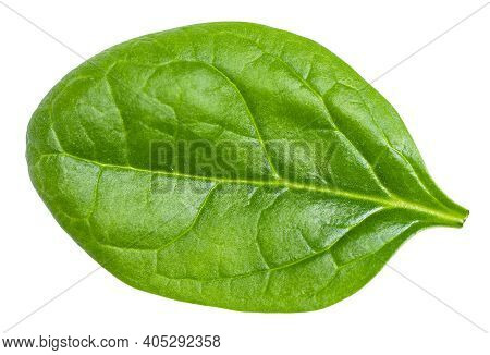 Single Fresh Green Leaf Of Spinach Leafy Vegetable Isolated On White Background