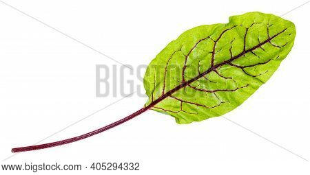 Fresh Leaf Of Green Chard Leafy Vegetable (mangold, Beet Tops) Isolated On White Background