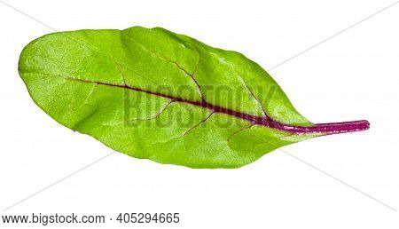 Natural Leaf Of Green Chard Leafy Vegetable (mangold, Beet Tops) Isolated On White Background