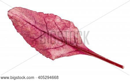 Fresh Leaf Of Red Chard Leafy Vegetable (mangold, Beet Tops) Isolated On White Background