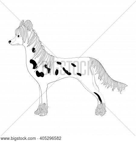 Chinese-crested Dog On White Background. Sketch.  Vector.