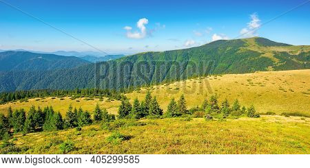 Summer Mountain Landscape In The Morning. Fir Trees On Grassy Meadows. Distant Hills Beneath A Blue