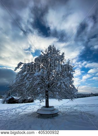 A Single Snow-covered Tree With A Bench On A Sunny Winter Day In Switzerland