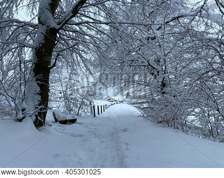 A Well-trodden Path Through The Snow In A Forest In The Middle Of Winter