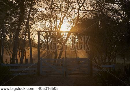 Beautiful Sunset Over A Cattle Farm, Fazenda, With A Lot Of White Cattle, Along The Transpantaneira
