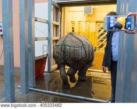 Great One-horned Rhinoceros Rhinoceros Unicornis Transport To Szeged Zoo