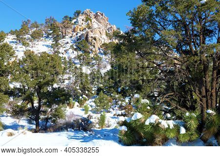 Pine Trees Surrounded By Snow On An Alpine Woodland Taken At Rural Badlands In The San Bernardino Mo