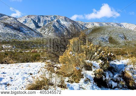 Sage Plants Surrounded By Snow With A Mountain Range Beyond Taken On Arid Badlands At The High Deser