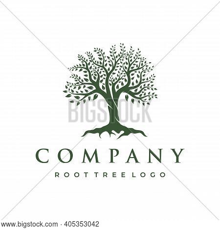 Abstract Vibrant Tree Logo Design. Root Vector - Tree Of Life Logo Design Inspiration