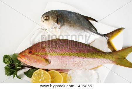 pomfret and fresh red snapper poster