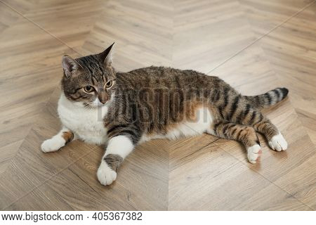 Cute Cat Resting On Warm Floor At Home. Heating System