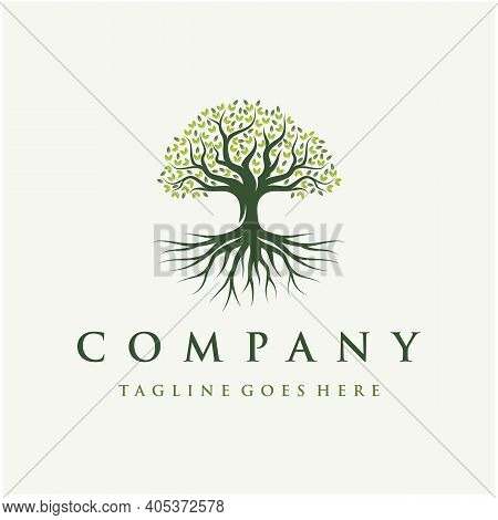 Abstract Vibrant Oak Banyan Tree Logo Design, Tree And Root Vector. Tree Of Life Logo Design Inspira