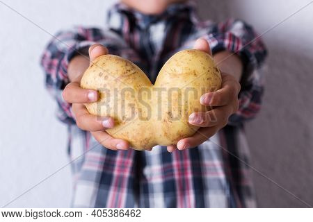 Trendy Ugly Vegetable, Funny Potato With Imperfect Heart Shape In Hands. Farmers Produce, Organic, M