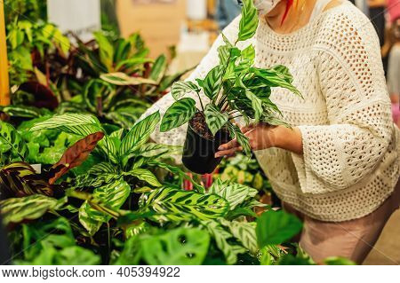 Houseplants Market, Selling Flower Arrangement. Flowers And Green Plants In Pots For Garden And Home
