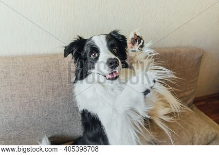 Funny Portrait Of Cute Puppy Dog Border Collie On Couch. New Lovely Member Of Family Little Dog Look