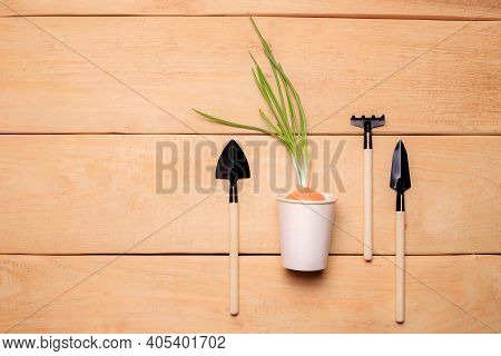 Garden Shovels On A Wooden Background .gardening Layout. Plant Care. Planting Plants. Homemade Flowe