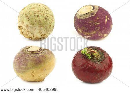 fresh turnip(Brassica rapa rapa), red radish, celery root and spring turnip on a white background