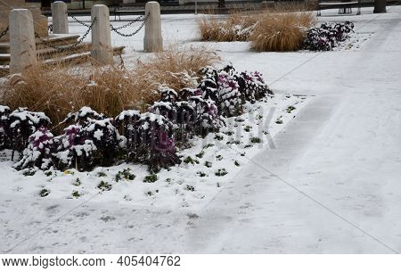 Planting Perennial Flowers In The Flowerbed In The City Flowerbed On The Square. Grow Grass And Bien
