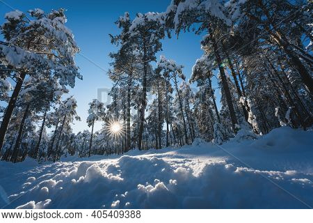 Snow Covered Trees In Alpine Forest In Sunlit Winter Landscape With Sun Star, Wildermieming, Tirol,