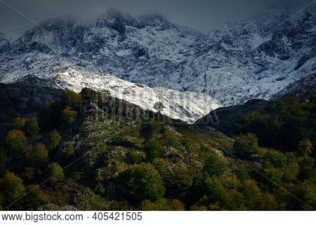 Lonely Tree In The Snowed Summits Of Picos De Europa