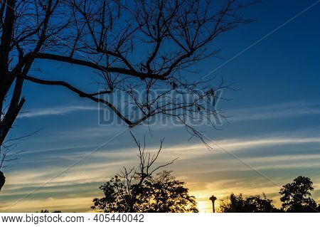 Beautiful Silhouette Leafless Tree And Sunset Sky, Blue And Yellow Backlight. Romantic And Peaceful
