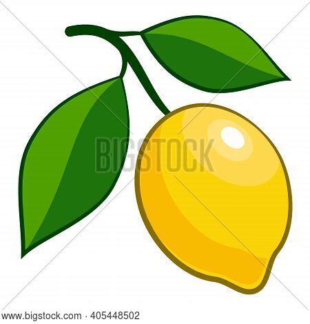 Drawn Ripe Lemon Citrus Fruit. Ripe Yellow Lemon Isolated On White Background. Drawn Citrus Fruit Wi