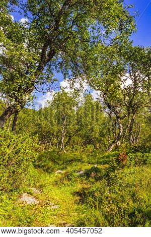 Norwegian Landscape With Trees Firs Mountains And Rocks. Norway Nature.