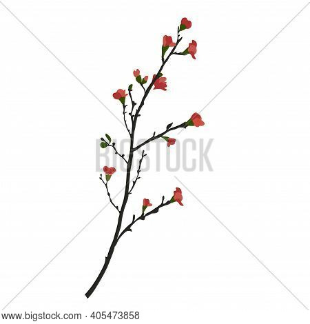 Sakura Sprout Vector Stock Illustration. The Pink Buds Of A Cherry Blossom. Spring First Shoots On T