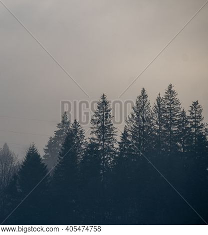 Spruce Forest On Foggy Autumn Or Winter Day. Misty Mountain Hills In Fog On Cloudy Weather