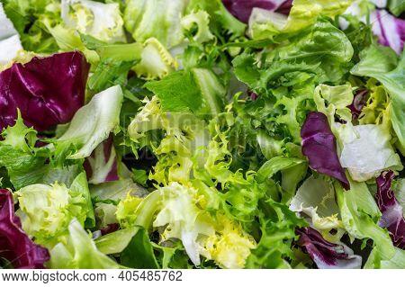 Salad Food Background, Freshness Green Salad Leaves Of Frisee, Romaine Salad, Radicchio