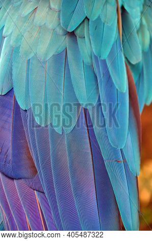 Multicolored Feathers Of Tropical Parrot, Background Of Beautiful Colorful Feathers Of Macaw Bird Wi