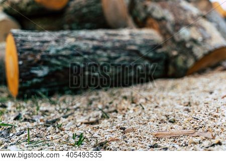 Saw Dust In Foreground With Huge Alder Logs Pile Out Of Focus - Abstract Woodwork Background