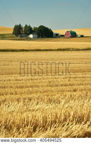 Red Barn And Cut Wheat Fields Vertical. Red Barn In Sunshine Amid Cut Fields In The Palouse. Washing