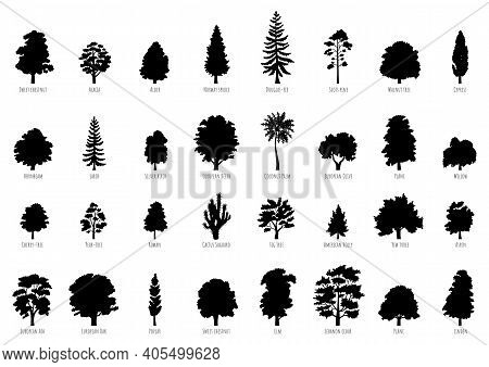 The Collection Of Trees Silhouettes Isolated On White Background. Big Vector Cartoon Set With Saplin