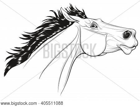 Linear Portrait Of A Thoroughbred Horse With Its Head Up. Running Stallion Laid Its Ears Back. Black