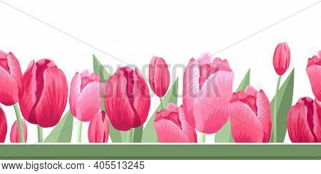 Seamless Border Of Tulips. Vector Illustration, Background, Pattern, Print For Packaging Paper, Post