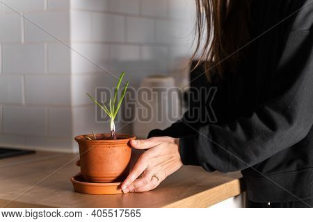 Millennial Girl Planting Home Garden In Flat. Pot With Onion And Garlic Herbs. Sustainable Lifestyle