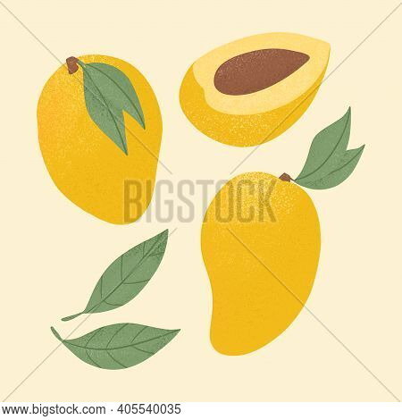 Ripe Mango, Whole And Half Sliced Mango. Sweet Mango Fruits Vector Hand Drawn Illustration On Yellow