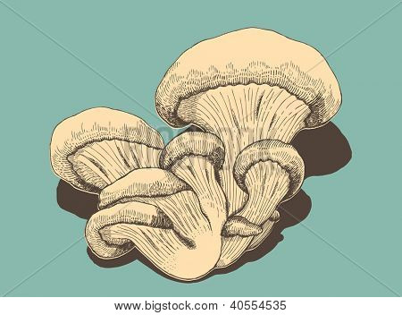 Oyster mushroom in retro style