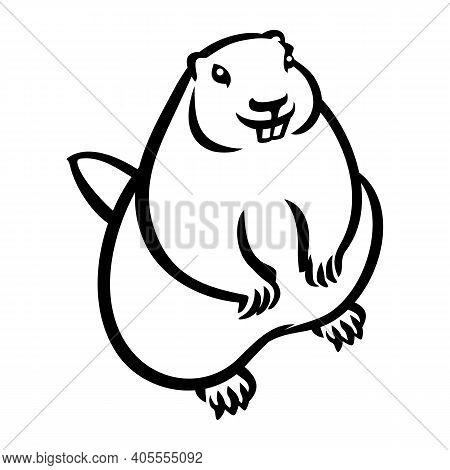 Hand Drawn Standing Groundhog Vector Illustration. Groundhog Day Holiday Element Vintage Outline Ske