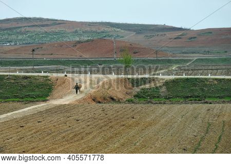Countryside Landscape, Dprk. Army Soldier Goes Along A Cultivated Fields With Ox At Dawn